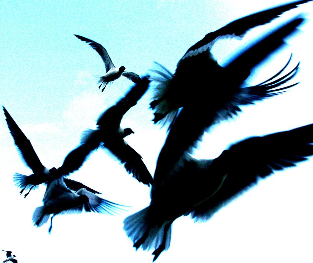 Seagullsblue